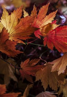 autumn... wen the nature is celebrating wit colors...