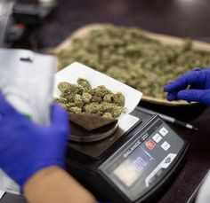 $800 available in stock Medical Marijuana, Cannabis, Weed Shop, Main Menu, Hemp Oil, Ganja