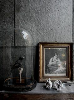 Display ideas. lifestyle. grey walls. taxidermy. antiques. www.naturalhistory.co.uk