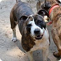 Adopt A Pet :: Bailey - Chester, SC