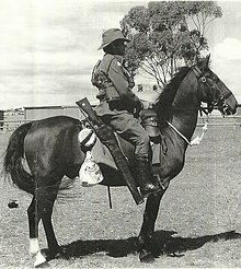 Waler Horse Owners and Breeders Association Australia Inc. Preserving the historical integrity of our heritage breed. Draft Horses, War Horses, Clydesdale Horses, Horse Breeds, Thoroughbred, Old West, Military History, Cattle, Farm Animals