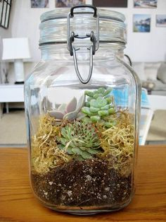 How To: Plant a Terrarium in a Jar | Apartment Therapy