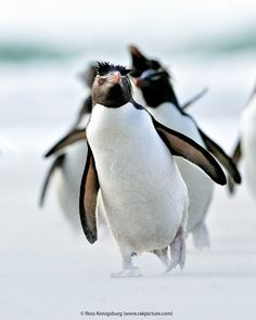 Extraordinary Penguins Photography | Abduzeedo Design Inspiration & Tutorials