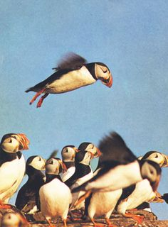 in 'The Family Life of Birds' (via Reanimation Library)