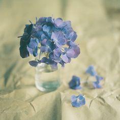 lavander,lavanda,malva,mauve flowers