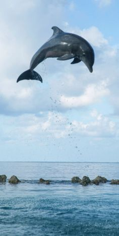 Dolphin sighting in Falmouth, Jamaica.