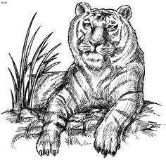 Coloring Pages for Adults Only | ... Coloring Page, Coloring Book of Tiger Coloring Page, India Coloring