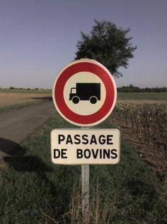 Camions interdits... à cause des bovins ?