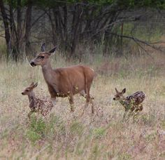 Motherly instincts, its hunting season!