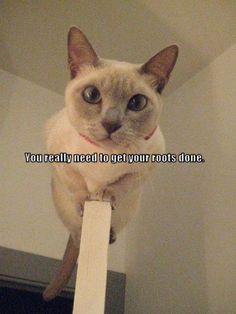 Funny Cat Pictures With Captions | Lol funny pictures of cats with captions pictures 4
