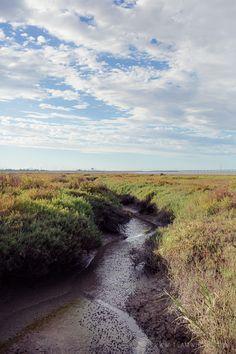 Baylands Nature Preserve in Palo Alto, California