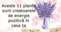 plante cu energie pozitiva Yoga Fitness, Health Fitness, Feng Shui, Home Deco, Health Tips, Life Hacks, Healthy Living, Exercise, Flowers