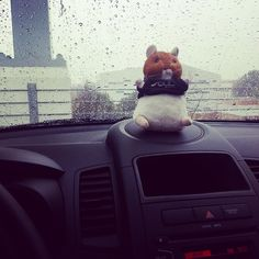 """Haha. Took this on tuesday and forgot to post. #Hamster #hamstercar #kia #kiasoul #soul #rain :)"" Photo taken by @fashion_bunnie on Instagram, pinned via the InstaPin iOS App! http://www.instapinapp.com (12/04/2014)"