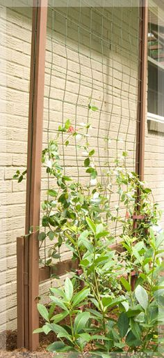 how to make a free standing trellis, this could work for Sweetpeas, I can smell them now