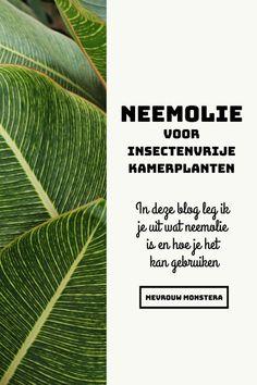 In deze blog leg ik je uit wat neemolie is en hoe je het kan gebruiken, zodat jij ook kan genieten van insectenvrije kamerplanten! #neemolie #insectenbestrijding #natuurlijkebestrijding #planten #kamerplanten #plants #urbanjungle Azadirachta Indica, Plant Leaves, Plants, Blog, Blogging, Plant, Planting, Planets