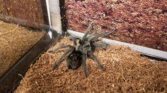 . Number, Female, Spiders, Animals, Animais, Spider, Animales, Animaux, Animal