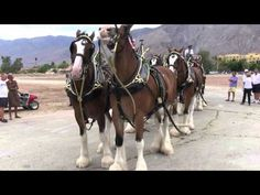 ▶ Budweiser Clydesdales (2012) - YouTube