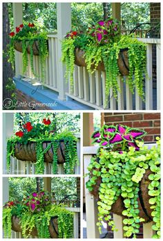 Container Gardening MUST PIN post for awesome curb appeal! Best ideas for hanging baskets to turn your front porch planters into instant WOW! DIY flower baskets that you can make this weekend! // 3 Little Greenwoods - Planters - ideas of Planters Front Porch Planters, Front Porch Flowers, Summer Front Porches, Window Box Flowers, Fence Hanging Planters, Flower Boxes Deck, Railing Flower Boxes, Front Porch Garden, Wall Planters