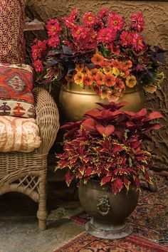 The rich tones of these flowering plants brings a bright, spicy vibe to your outdoor space. The warm colors contrast nicely with the aged patina of metals, woods and woven furniture. Fall Planters, Flower Planters, Flower Pots, Container Flowers, Container Plants, Container Gardening, Outdoor Flowers, Outdoor Plants, Beautiful Gardens