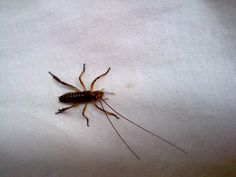New Zealand creatures. What is this? Looks creepy.