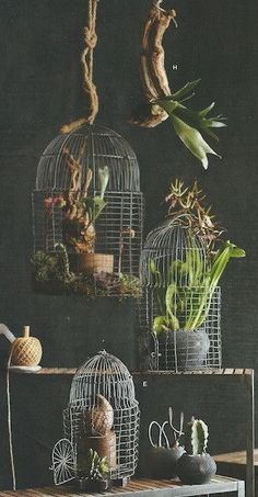 Roost Foliage Bird Cage Planters Set/3. $290