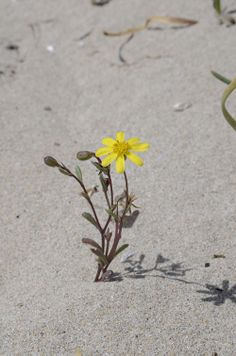 La primavera  - il fiore solitario