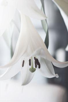 Scandinavian Simplicity - white lily