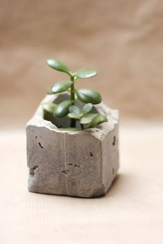 Make your own concrete vases for your cacti and succulents and try our step-by-step-tutorial. (in German, with pictures)