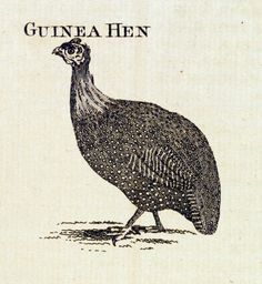 """Ere I would say  I would drown myself for the love of the guinea hen"" (Act 1 Scene 3, Line 356-357) Personification of Desdemona to a guinea hen. A contemptuous reference made by Iago"