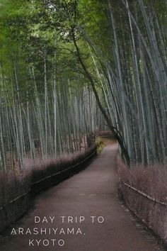 What to do on a day trip from central Kyoto, Japan to Arashiyama (bamboo forest, monkeys and travel souvenirs).