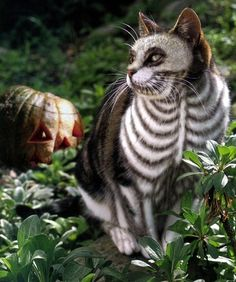 A bunch of cats and dogs in Halloween costumes. - Imgur