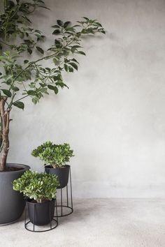 Indoor Garden Styling / urban jungle in amazing pots Plantas Indoor, Japanese Tree, Small Fountains, Deco Nature, Decoration Plante, Interior Plants, Botanical Interior, Tree Interior, Interior Garden