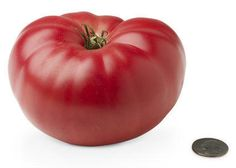 19 weeks: Baby is the size of an heirloom tomato