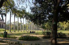 Lush green trees @ Lodhi Garden , Delhi , India