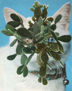 Chicago-based artist Stephen Eichhorn makes surprising collages, drawing inspiration from houseplant guides and books about cats Collages, Cat Plants, House Plants, Cat Toilet, Cat Garden, Cat Birthday, Pretty Cats, American Artists, Art Projects