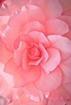 ɛïɜ Pink Flower ɛïɜ