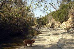 Walnut Creek hike & bike trail...great place to take your dog off leash.