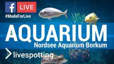 Aquarium, Frame, Blog, Animals, Fish, Have A Good Weekend, North Sea, Website, Nice Asses