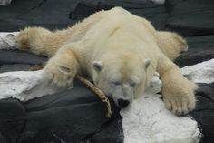 Polar Bear Dies at SeaWorld San Diego After Her Only Companion Was Sent Away