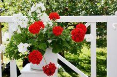 Kako da uredite balkon ako nemate mnogo vremena za biljke