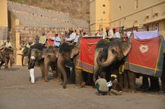 Elephants at Amber Fort, Jaipur, India. I totally rode an elephant here! Such an amazing experience. Elephant Ears, Elephant Love, Most Beautiful Animals, Beautiful Creatures, Elephant India, Animal Tv, Water For Elephants, Creature Feature, Travel Memories