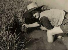 Donne a lavoro: Trapianto di riso.