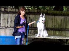 The Best Way To Easily Train Your Dog - http://petcarecheap.com/the-best-way-to-easily-train-your-dog/