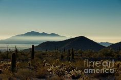 Fog In The Distance by Amy Sorvillo