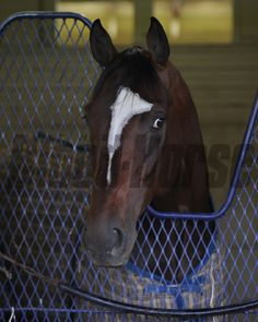 Tonalist at Belmont Park April 30. Coglianes Photos/Susie Raisher