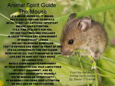 Animal Spirit Totem/Guide: Mouse Spirit Meaning, Animal Totems, Spirit Animal Totem, Animal Spirit Guides, American Spirit, My Spirit, Magick, Wiccan, Witchcraft