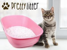 Are you tired of using dusty, heavy, smelly, clumping cat litter that can be harmful to your cat's respiratory system? We were too. That's why we made PrettyLitter: an innovative, subscription-based health-monitoring cat litter that changes color when it detects issues with your cat's health. It saves cats lives! In addition, it's virtually dust-free, eco-friendly, feline-safe, and has better odor control than any other litter on the market.