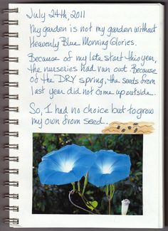 Garden Journal The Story of Morning Glory Page 1 0f 5