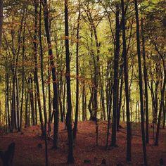 #lackoj #wood #autumn #forrest