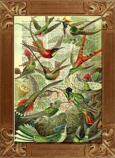 Humming birds, vintage illustration printed on old dictionary page